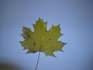 leaf, sun