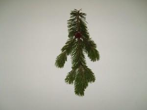 pine, branch, texture