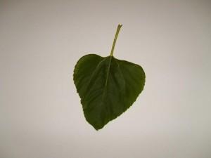 single, leaf