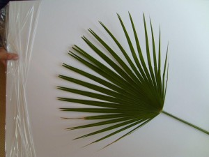 washingtonia, palm, leaf