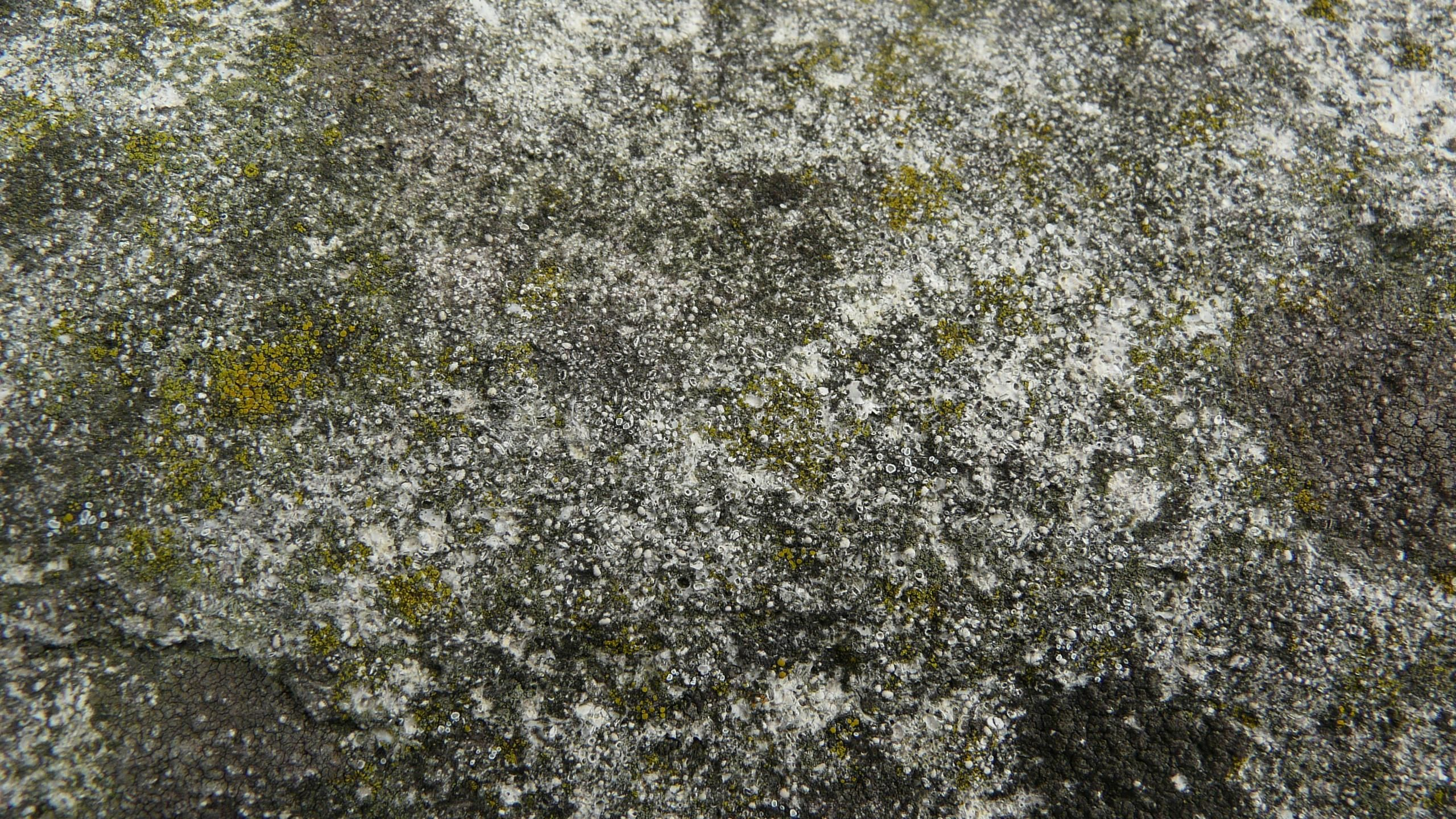 Free Picture Stone High Definition Texture