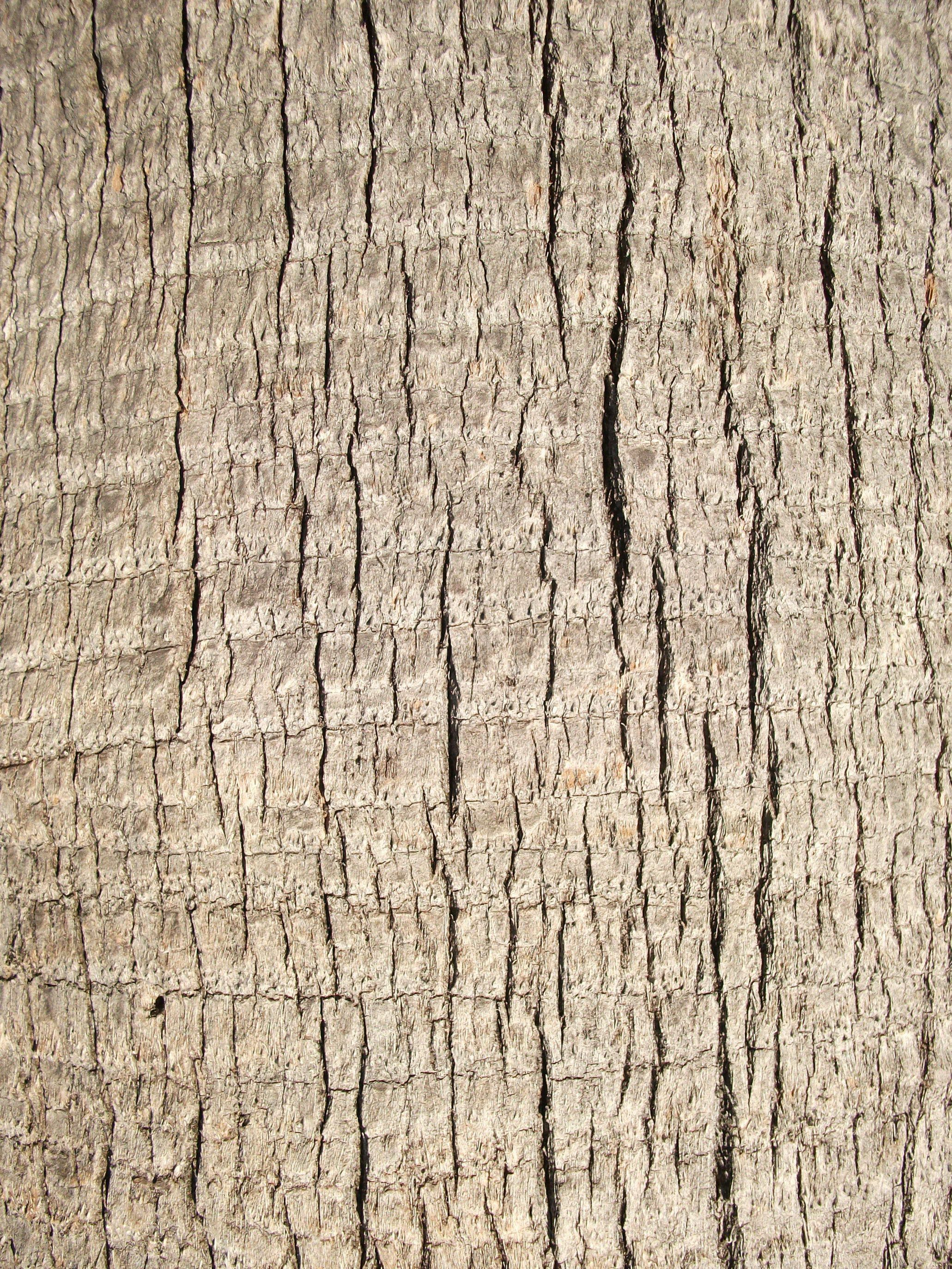Tree Bark Drawing Pattern
