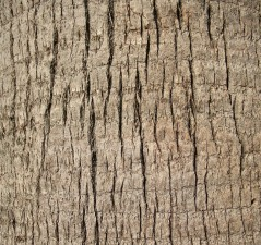 up-close, palm tree, trunk, texture