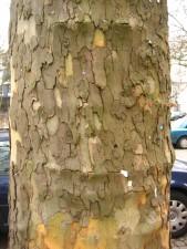 écorce, écorce, arbre
