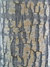 l'écorce, la texture, le bois