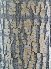 bark, texture, wood