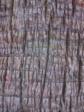 de près, palmier, le tronc, le cortex, la texture
