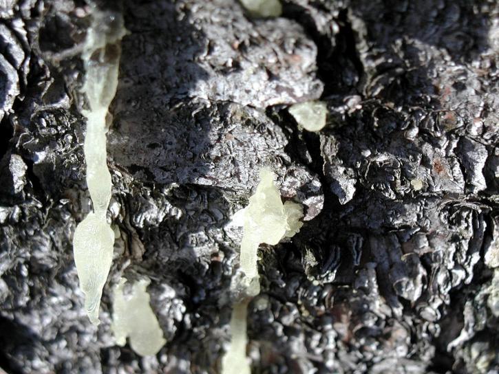 cortex, texture, haut, détails