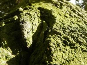 vieux, vert, grunge, arbre, écorce