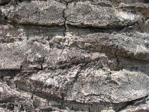viejo, gris, palmera, tronco, de cerca, patrón