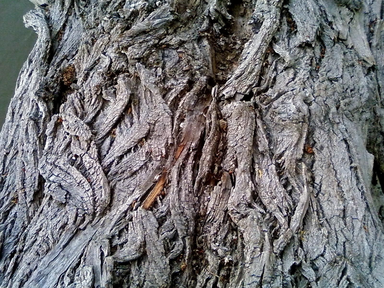 free picture old tree bark upclose texture