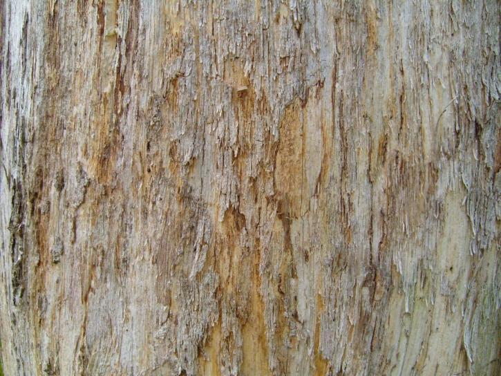 vieux, bois, arbre, tronc, à proximité