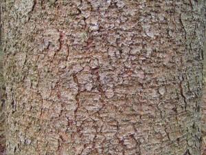 tall, träd, bark, textur
