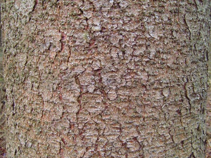 pine, tree, bark, texture