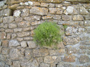 buisson, mur