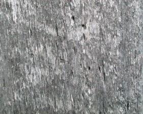 weathered, barn, wood, worm, holes