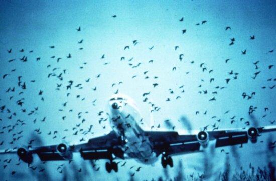 herring gulls, jet, path
