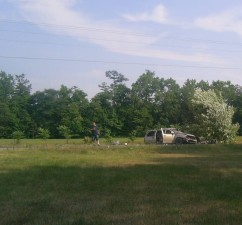 wrecked, hit, tree