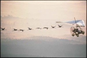 vliegen, motor, hangen, zweefvliegtuig, site, vogels