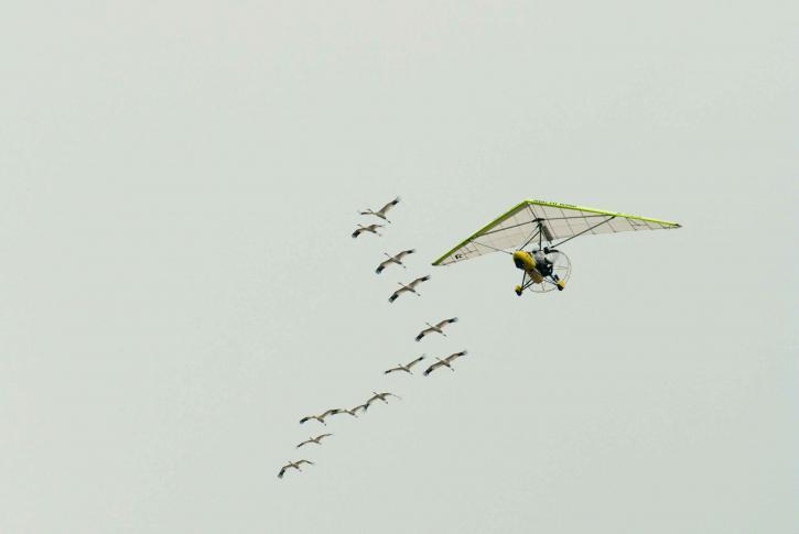 caída, deslizamiento, las aves