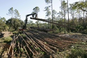 heavy, equipment, downed, logs