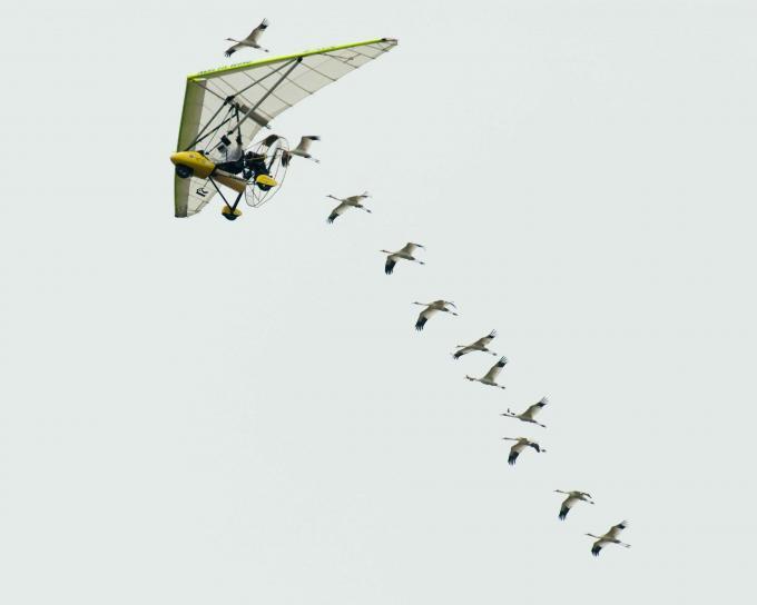 operation, migration, flyover