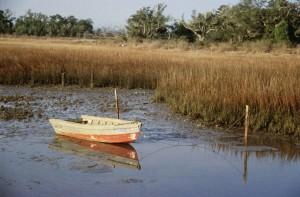 petit bateau, échoué, marais, exposé, huîtres, bas, marée