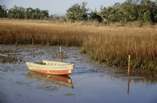 small, boat, aground, marsh, exposed, oysters, low, tide