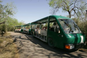 turisztikai, park, busz