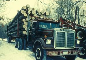 truck, carries, many, aspen, cut, trees