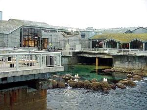 Monterey, akvárium, oceán