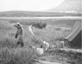 bear, camp, old, photography