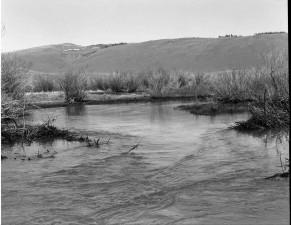 beaver, dam, vintage, photo