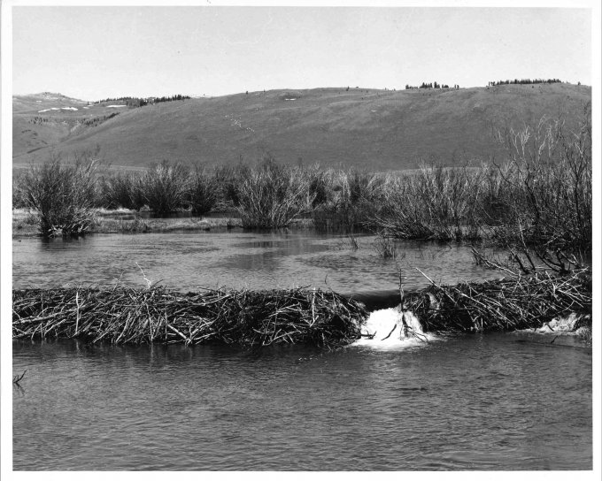 beaver, dam, vintage, old, photo