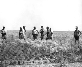 biologists, personnel, field work, vintage, image
