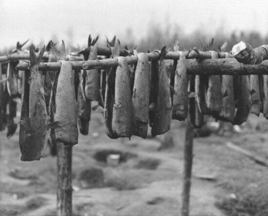 fish, drying, racks