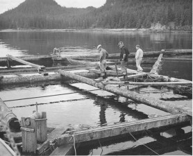 floating, fish, trap, constructed, stripped, logs, lumber