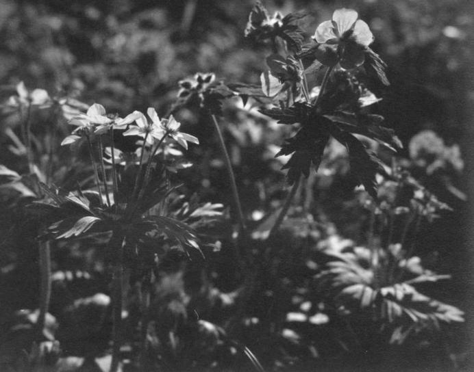 flores, hierba, viejo, vintage, foto