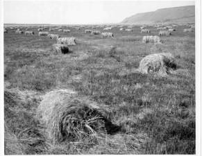 hay, bales, ranch, meadow