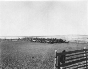 herd, large, corral