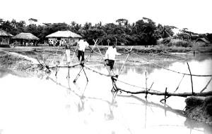bambou, construit, pont, intégrale, outil, Bangladesh, village, la vie
