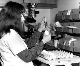 жена, биолог, науката, яйца, инкубация, вирус, умножение