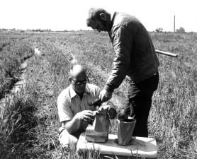 historical, photo, men, field work
