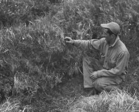 Povijesno, fotografija, čovjek, visok, trava