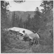 history, photo, people, forest, plane, wreakage