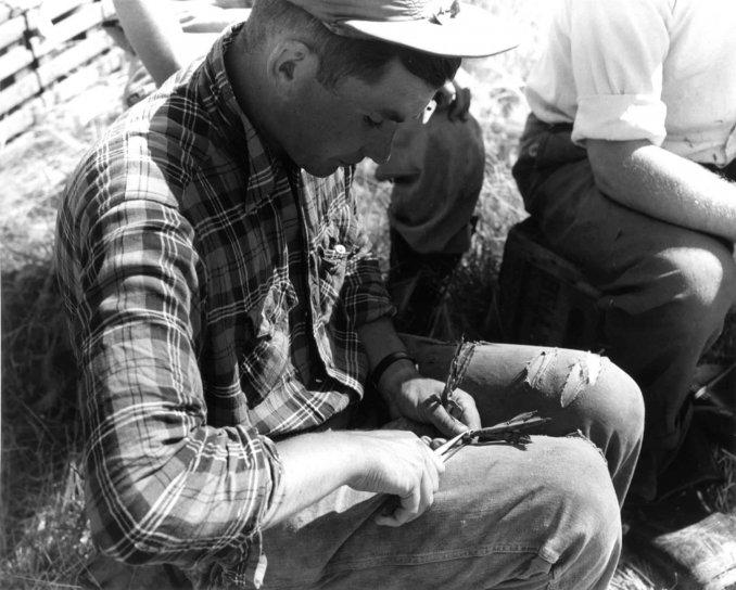 men, holding, bird, historical, vintage, photo