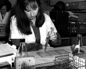 microbiólogo, se muestra, la entrega, el tejido, la cultura, las muestras, de microtitulación, placa