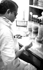 technician, laboratory, conducting, analysis, petri, dish, cultures