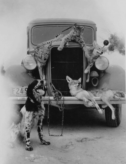 hunting, catch, old, vintage, photography
