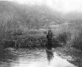 man, beaver, dam, old, photograph